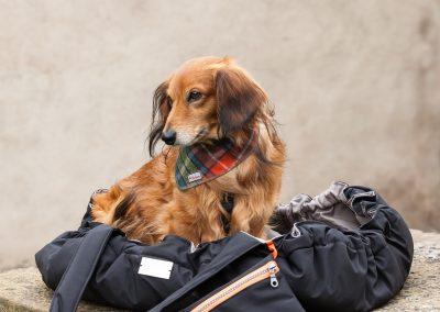 Hundemode  Chaica